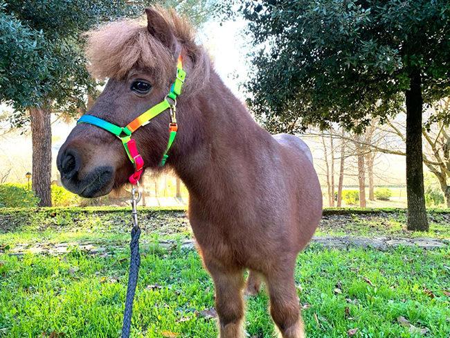 Pensione per cavalli ed escursioni a cavallo Avellino